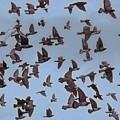 Flock Of Pigeons by Bill Kellett