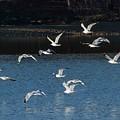 Flock Of Them by John Benedict
