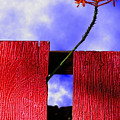 Flora And The Red Fence by Paul Wear