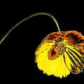 Flora by Kristin Elmquist