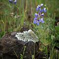 Flora On The Plateau by Barbara Matthews