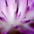 Florabundance 1 by Lyn  Perry