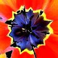 Floral 1229 by Chuck Landskroner