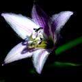 Floral 7-24-09 by David Lane