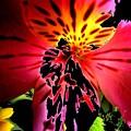 Floral 711 by Chuck Landskroner