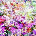 Floral Art Clvi by Tina Baxter