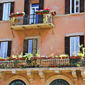 Floral Balcony by Denis Brien