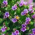 Floral Beehive by Georgiana Romanovna