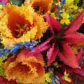 Floral Blast by Tim Allen