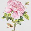 Floral Botanicals-jp3779 by Jean Plout
