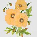 Floral Botanicals-jp3785 by Jean Plout