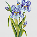 Floral Botanicals-jp3786 by Jean Plout