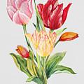 Floral Botanicals-jp3788 by Jean Plout