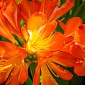 Floral Burst by Derek Dean
