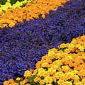 Floral Carpet by Jacklyn Duryea Fraizer