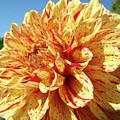 Floral Dahlia Flower Art Print Orange Red Dahlias Baslee by Baslee Troutman