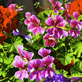 Floral Design 5 Dark by Joe Geraci