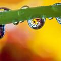 Floral Drop Trio  8054 by Karen Celella