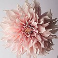 Floral Elegance by Sarah Waldman