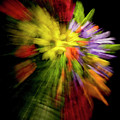 Floral Explosion by Frederic A Reinecke