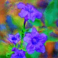 Floral Expression by David Lane