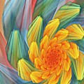 Floral Expressions 1 by David Lane