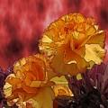 Floral Fiesta by Tim Allen