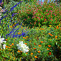 Floral Flow by Glenn McCarthy