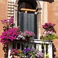 Floral Garden by Ron Koivisto