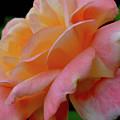 Floral Glow by Rachel Mahoney