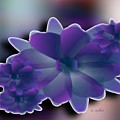 Floral Grace by Iris Gelbart
