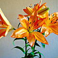 Floral Impression by Barbara Zahno