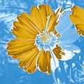 Floral Impression by Teresa Zieba