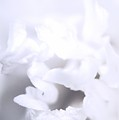 Floral In White by Paul Wilford