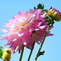 Floral Landscape Art Print Pink Dahlia Flower Blue Sky Canvas Baslee Troutman by Baslee Troutman