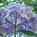 Floral Landscape Blue Hydrangea Flowers Baslee Troutman by Baslee Troutman