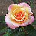 Floral Print 108 by Chris Flees
