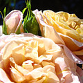 Floral Roses Garden Art Prints Baslee Troutman by Baslee Troutman