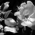 Floral Spotlight  by Amanda Martin