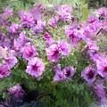 Floral Study 053010 by David Lane