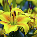 Floral Sunshine by Edward Congdon