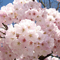 Floral Tree Blossoms Flowers Pink Art Baslee Troutman by Baslee Troutman