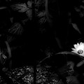 Floral Yellow Peek A Boo Bw by Thomas Woolworth