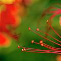 Florals by Joveria Wajih