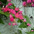 Flores by Rafaela Costa