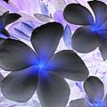 Florescent Flowers by Farah Faizal