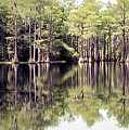 Florida Beauty 10 - Tallahassee Florida by Andrea Anderegg