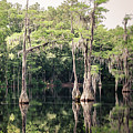 Florida Beauty 9 - Tallahassee by Andrea Anderegg