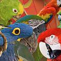Florida Birds by Gene Norris