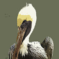 Florida Brown Pelican by Allan  Hughes